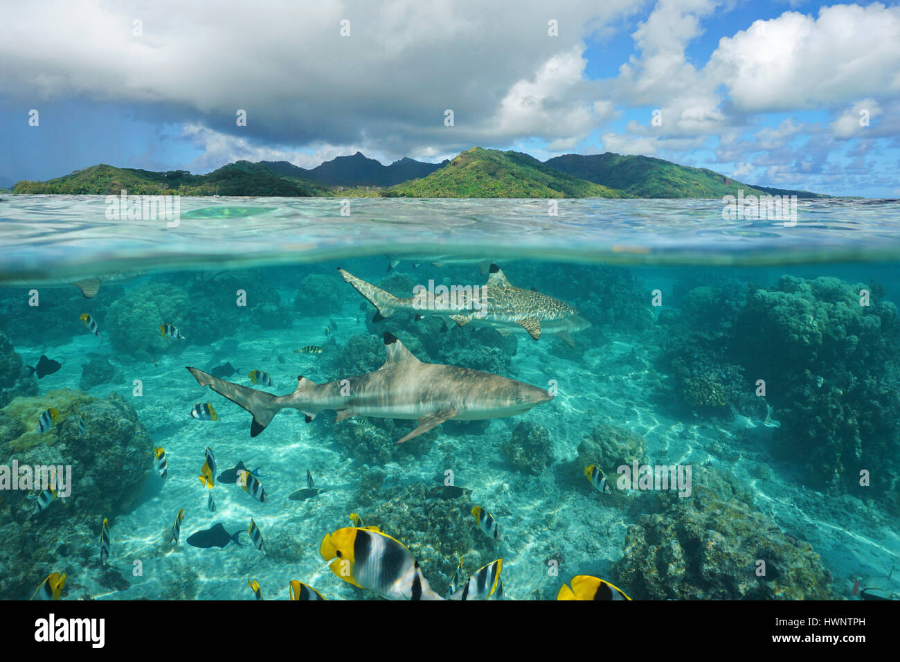 over under sea surface sharks with tropical fish underwater and