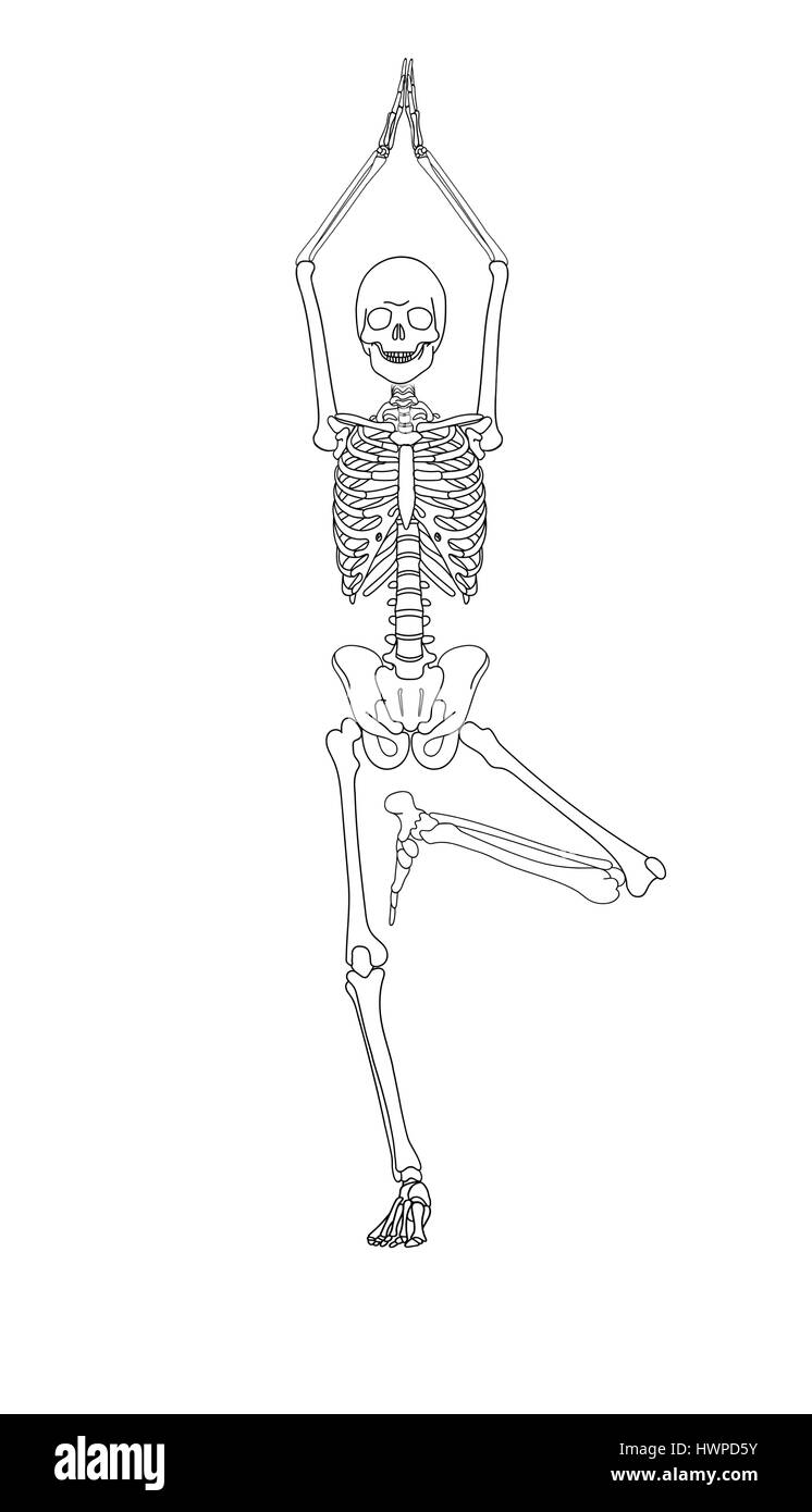 Human Skeleton Drawing Pose Crazywidowfo