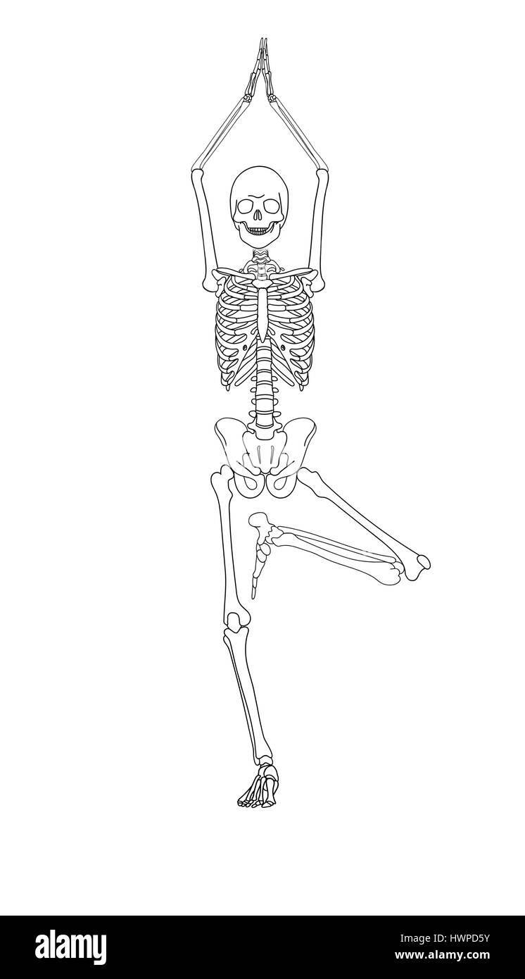 Human Skeleton Drawing Pose Crazywidowfo