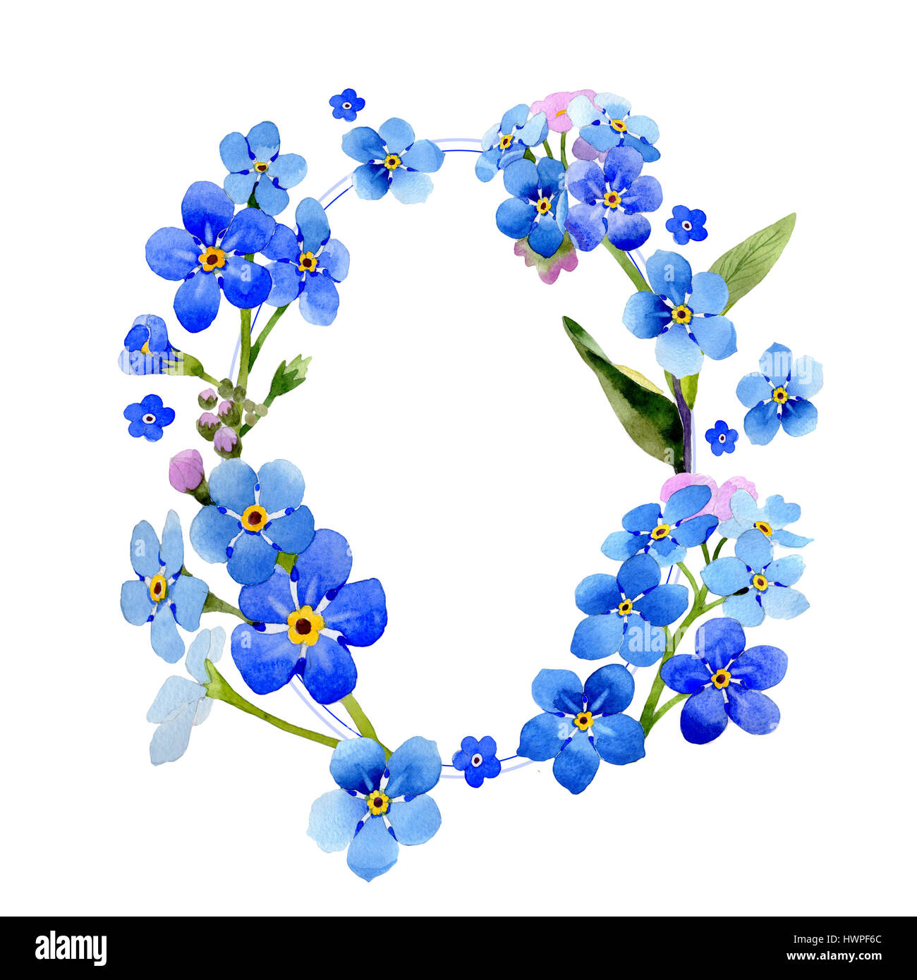 Wildflower myosotis arvensis flower wreath in a watercolor style wildflower myosotis arvensis flower wreath in a watercolor style isolated izmirmasajfo Gallery
