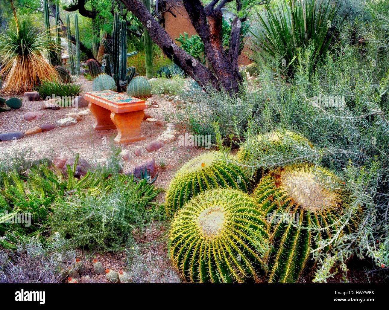 Ordinaire Cactus Garden With Bench In Tucson Botanical Gardens. Tucson. Arizona