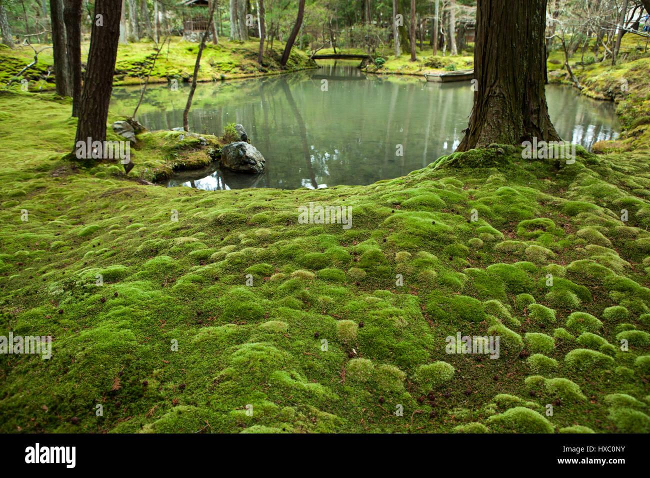 The moss garden at saihoji temple is one of the few - Moosgarten kyoto ...