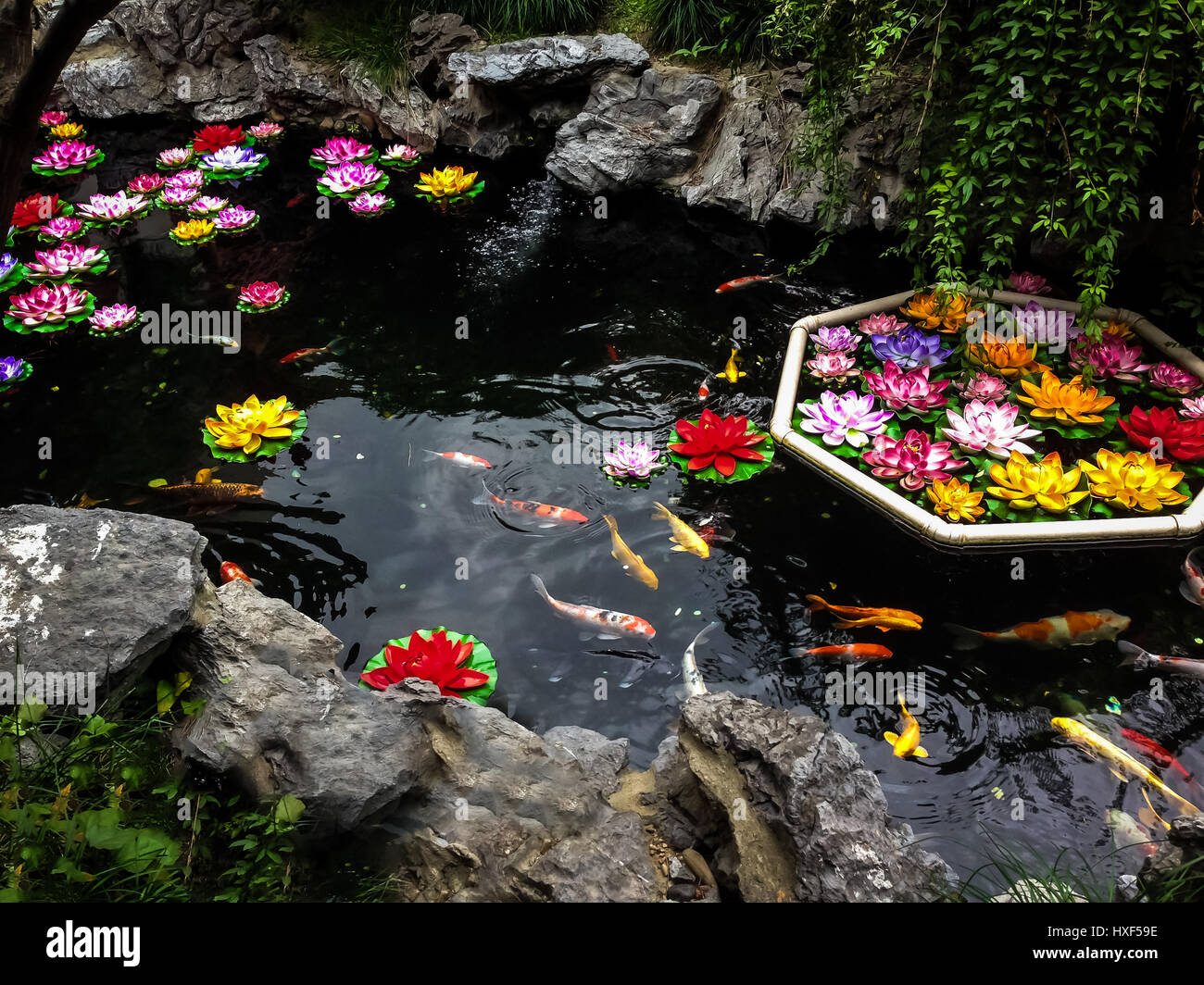 Koi Fish And Flowers On A Pond Shanghai China Stock Photo Royalty Free Image 136787098 Alamy
