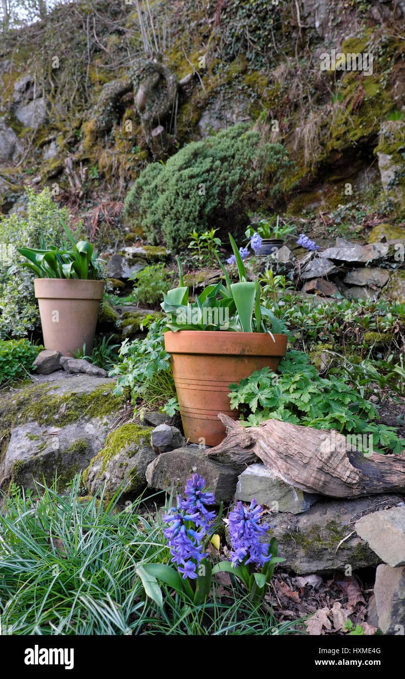 Hollowed logs make a great flower pot! | Rock garden |Rock Garden With Pots