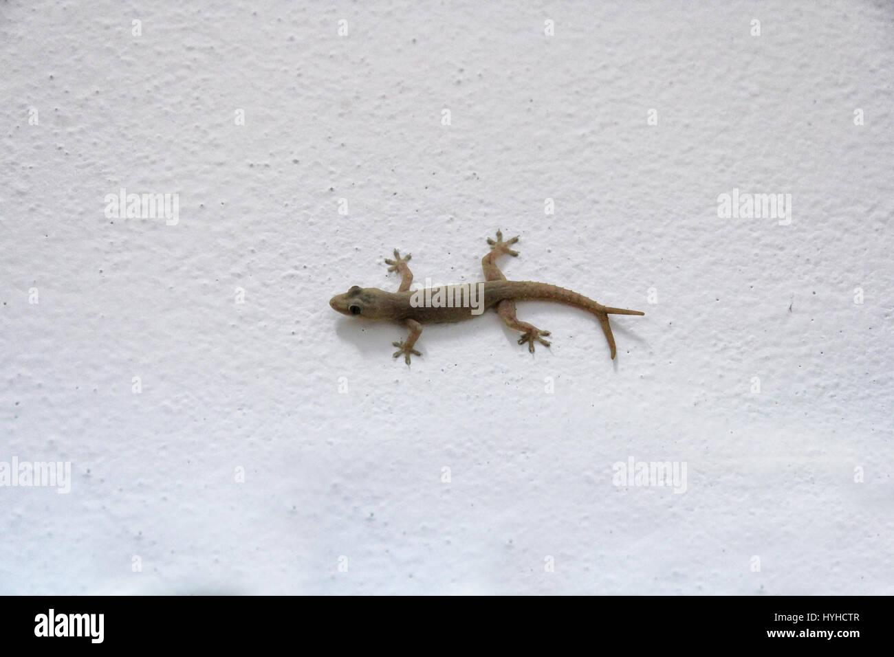 gecko climbing wall stock photos & gecko climbing wall stock