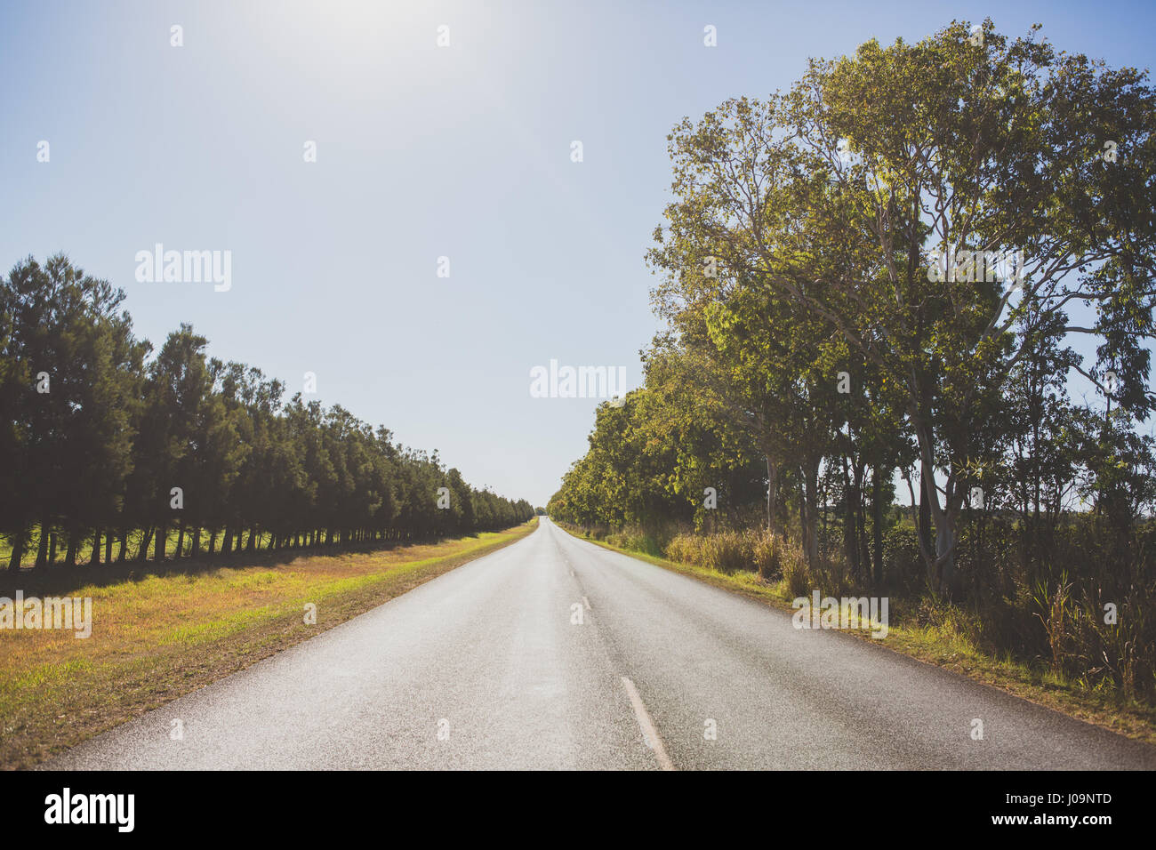 Empty straight road lined with trees in North Queensland ... for Straight Road With Trees  70ref
