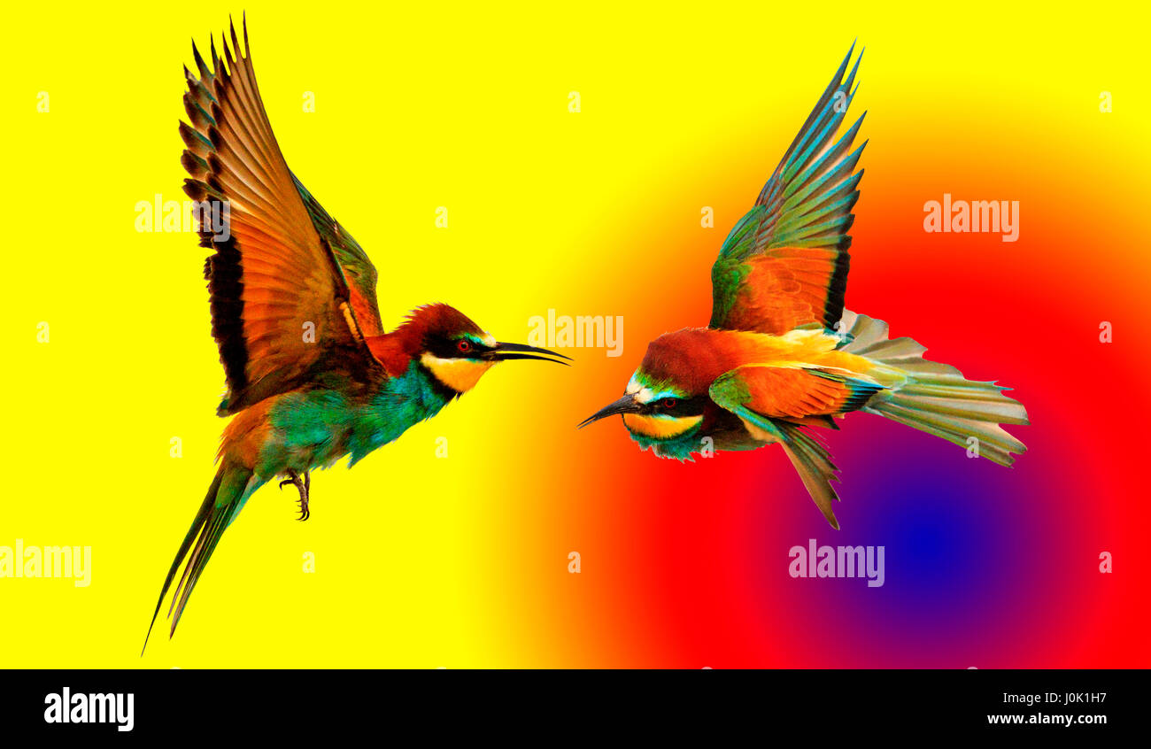 pair of colored birds on colored background with circles natural