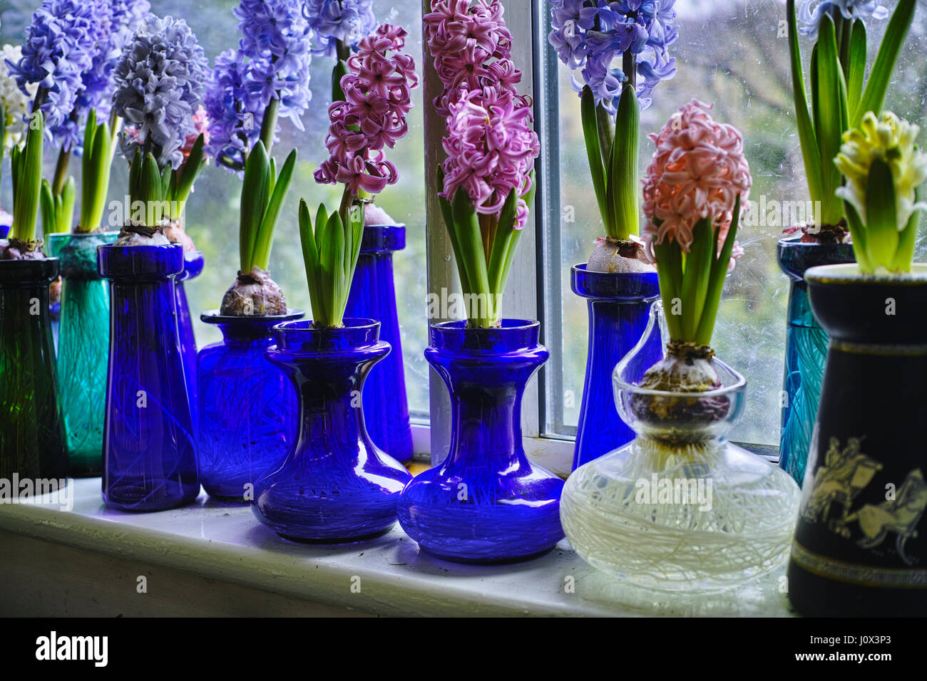 Antique victorian glass hyacinth bulb vases with bulbs which are antique victorian glass hyacinth bulb vases with bulbs which are forced into blooming in time for christmas and are cultivated indoors reviewsmspy
