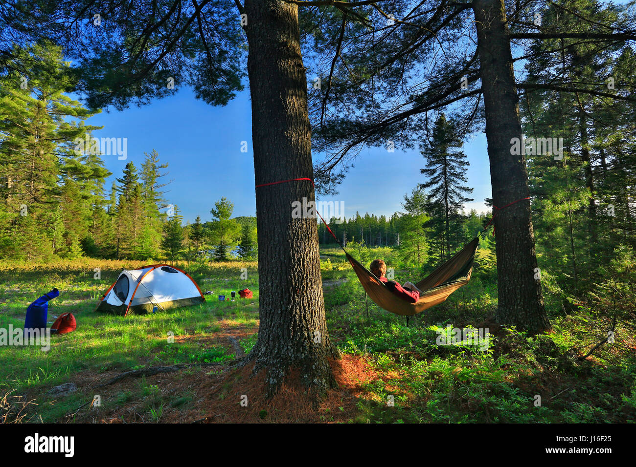 camper lounges on a hammock between two trees at saint regis river new york camper lounges on a hammock between two trees at saint regis river      rh   alamy