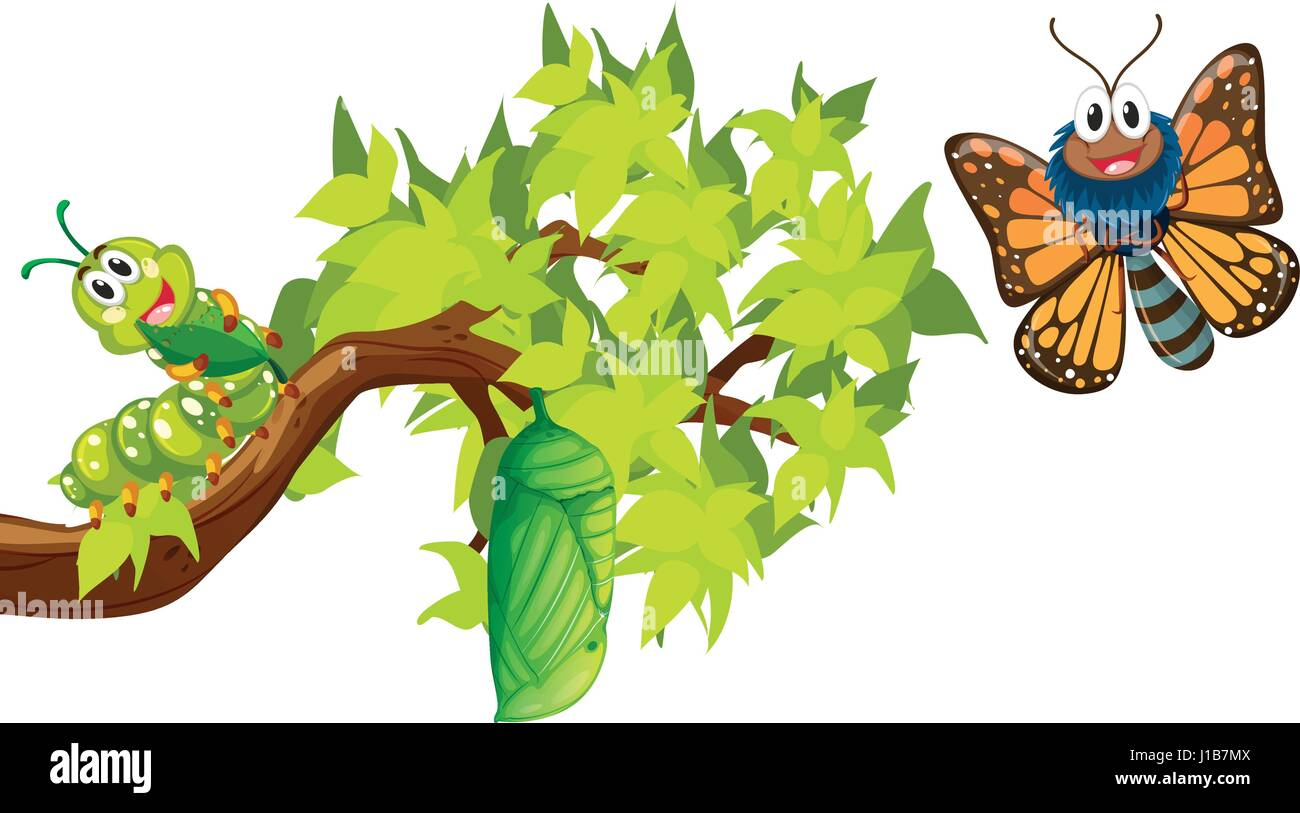 life cycle of monarch butterfly illustration stock vector art