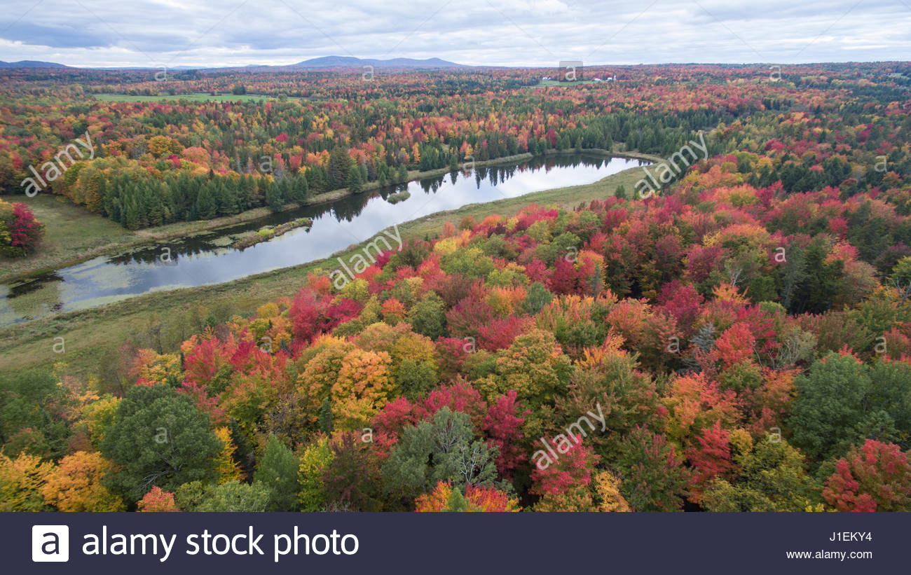 Aerial of maple trees at their peak of the fall foliage in eastern aerial of maple trees at their peak of the fall foliage in eastern canada sciox Choice Image