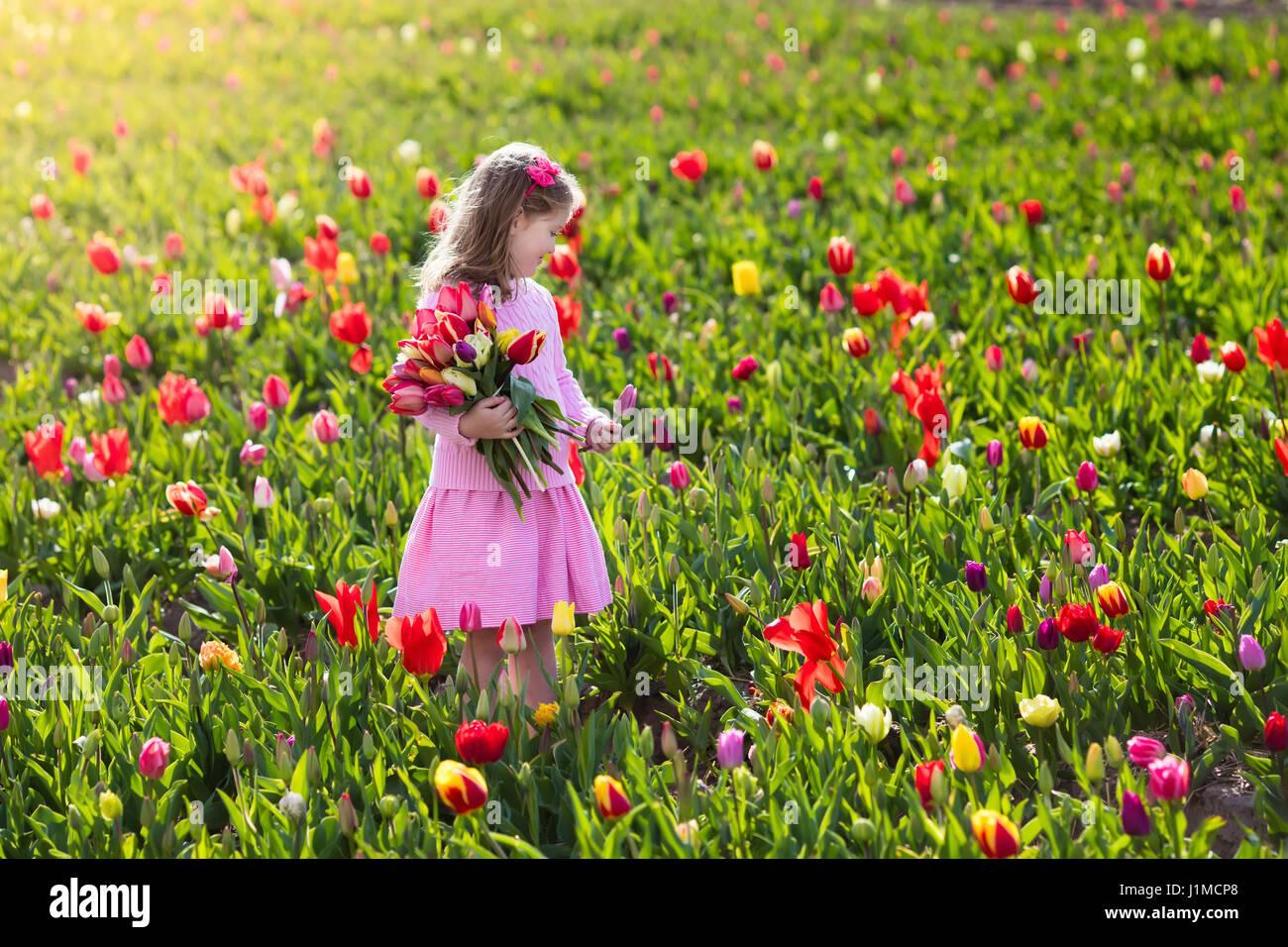 Wallpaper Tulips, flowers, field, sun, summer desktop wallpaper ...