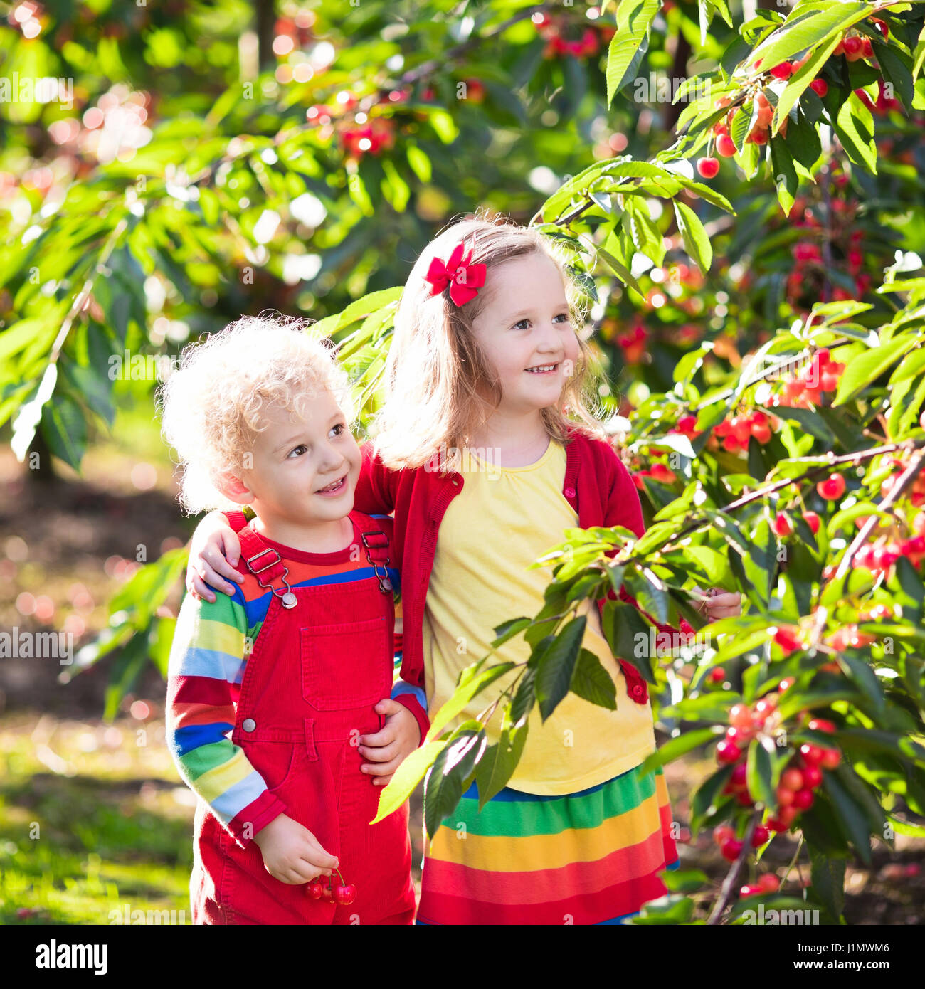 Kids picking cherry on a fruit farm. Children pick cherries in ... for Fruit Farm Photography  126eri
