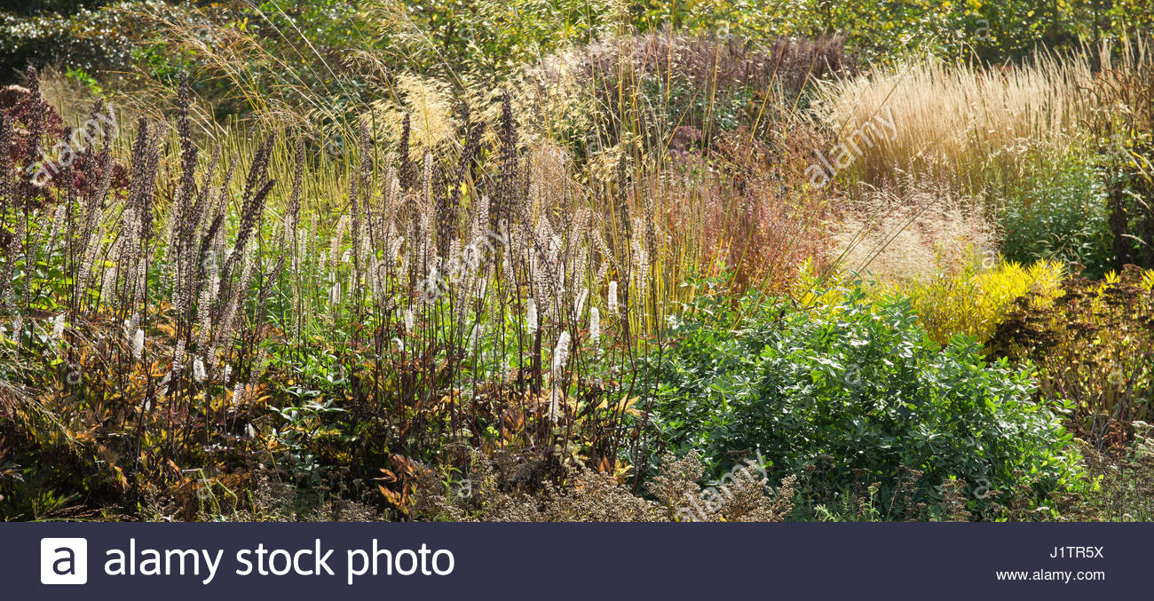 Borders in autumn ornamental grasses and seedheads at for Piet oudolf fall winter spring summer fall