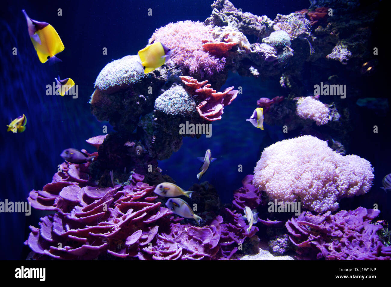 Seattle washington usa jan 25th 2017 exotic coral for Jan s tropical fish
