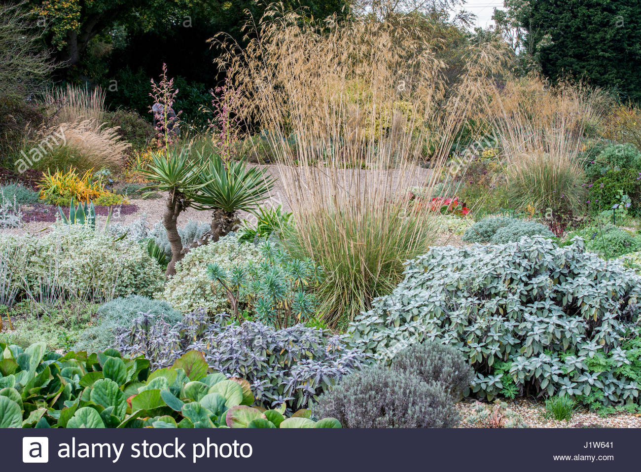 Delightful BETH CHATTO GARDENS THE DRY GARDEN IN AUTUMN