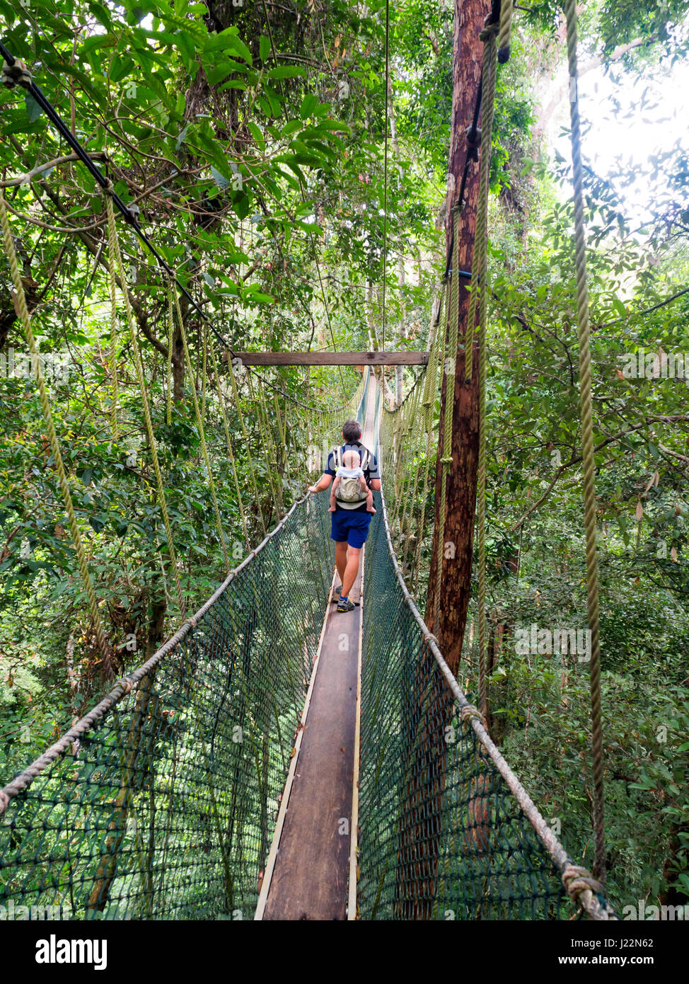Man carrying a baby on the canopy walkway in Taman Negara National Park Malaysia & Man carrying a baby on the canopy walkway in Taman Negara National ...