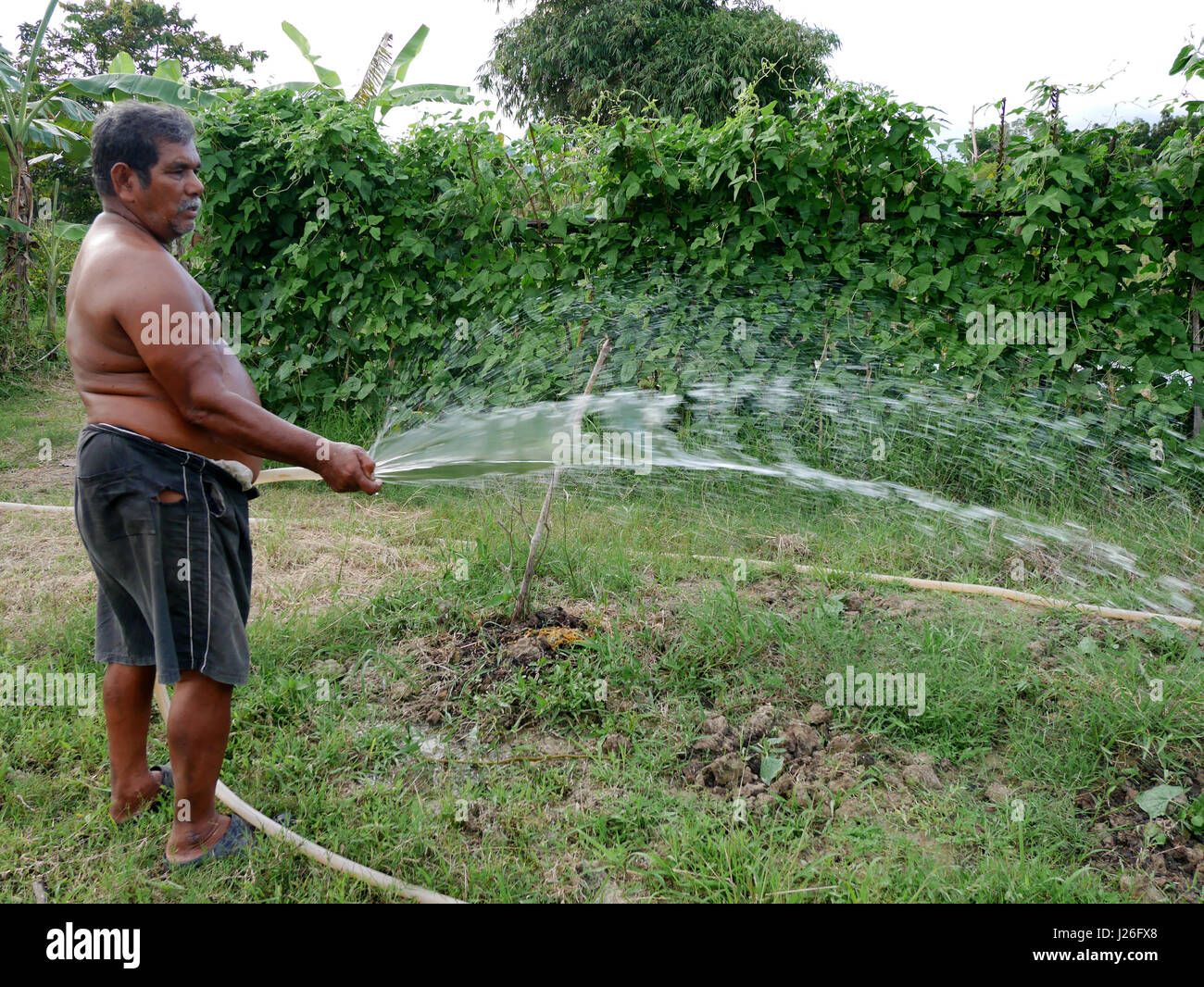 Thai Fat Man Older Work Watering To Plant And Vegetable In Garden At  Agricultural Countryside Farm On April 11, 2017 In Phatthalung Province Of  Southe