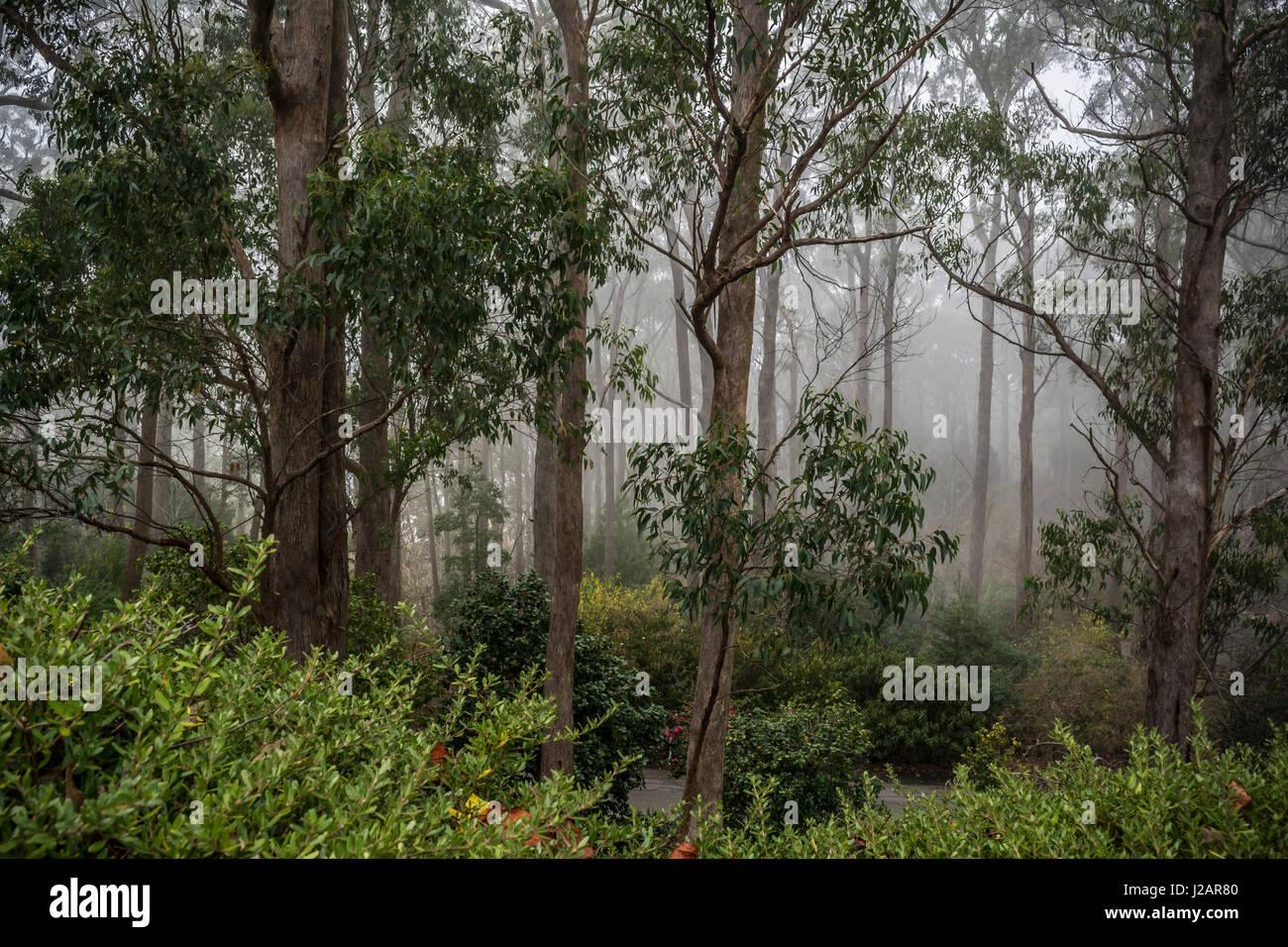 The majestic gum trees of mount lofty botanic garden for Garden design under gum trees