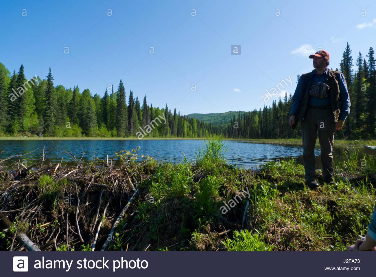 Alaska matanuska susitna county talkeetna - Mature Caucasian Man Standing On Beaver Dam With A Reservoir Of Fresh Water Behind Him Talkeetna Mountains Matanuska Susitna Borough Alaska Usa