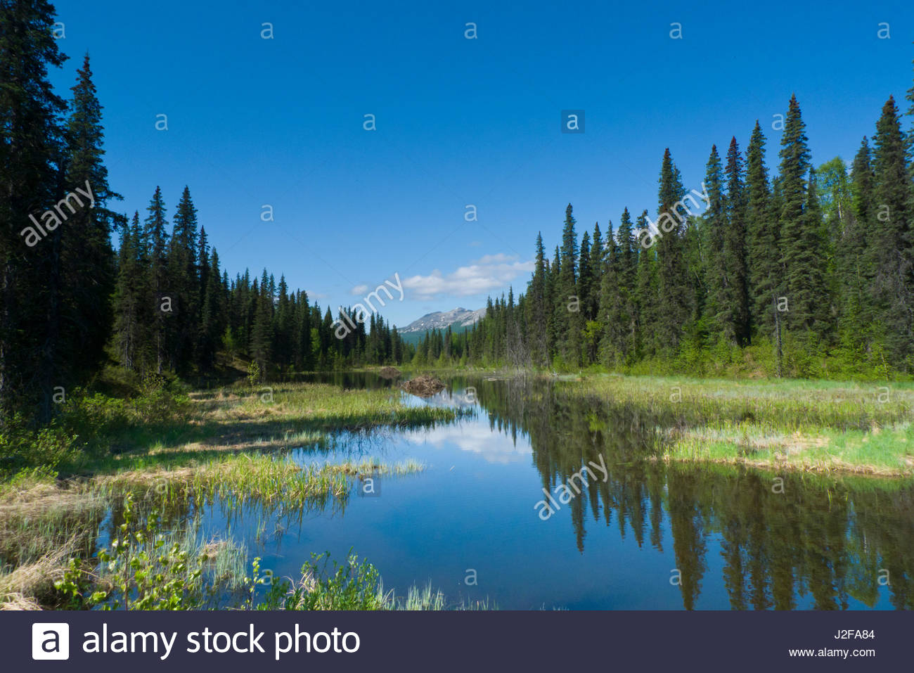 Alaska matanuska susitna county talkeetna - Fresh Water Lake Formed By A Beaver Dam Talkeetna Mountains Matanuska Susitna Borough Alaska Usa