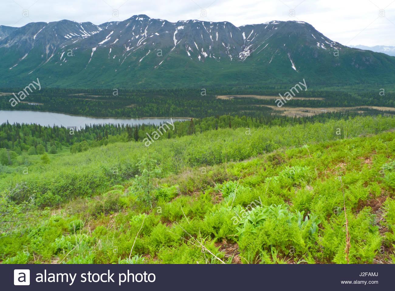 Alaska matanuska susitna county talkeetna - Stock Photo View From Hill East Of Miami Lake In The Talkeetna Mountains Matanuska Susitna Borough Alaska Usa