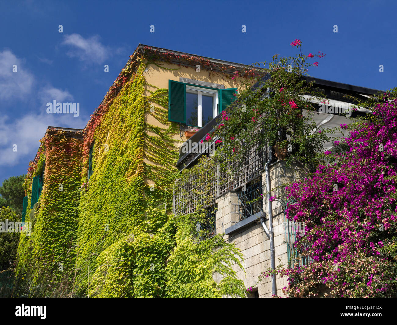 colorful leaves on house walls of house in naples covered with