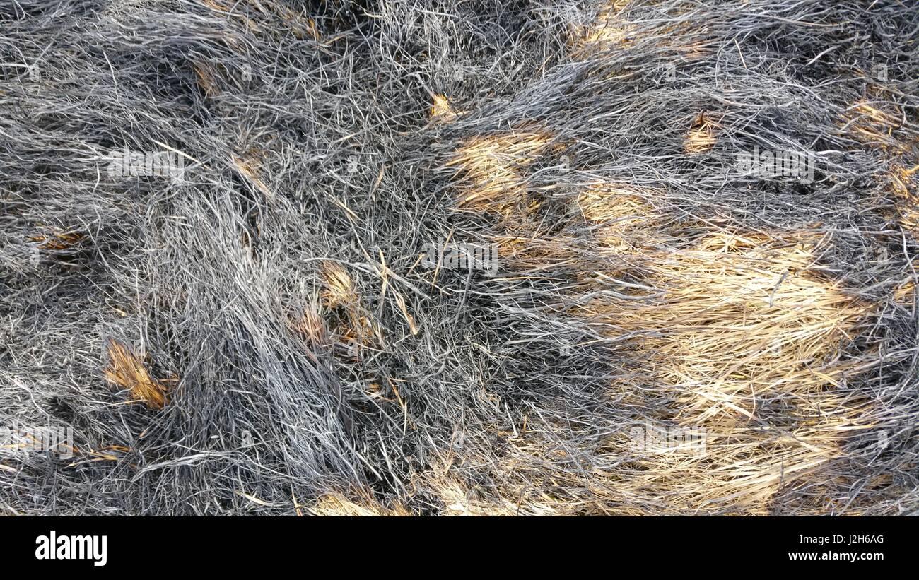 dry grass field background. Burned Dry Grass Field Background B