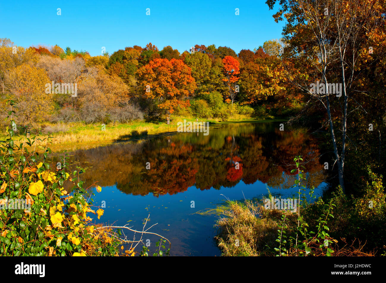 usa minnesota sunfish lake fall color reflected in pond