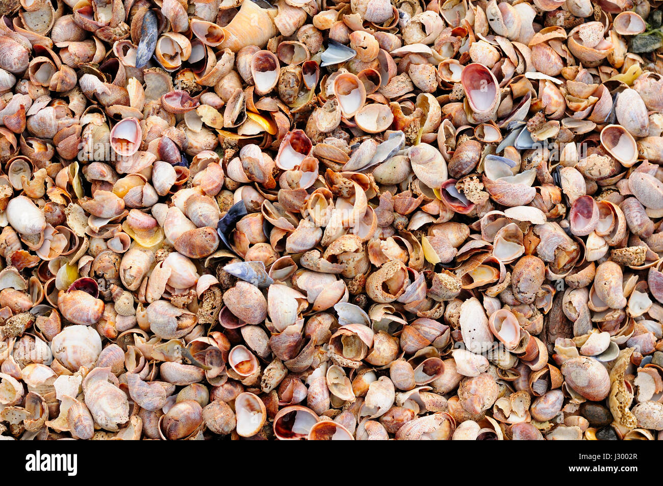 Many different seashells at lowtide in long island sound at silver many different seashells at lowtide in long island sound at silver sands state park in milford connecticut on an overcast day nvjuhfo Image collections