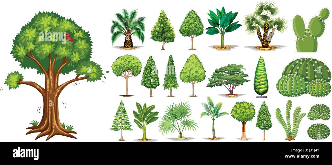 Different Types Of Trees Illustration Stock Vector Art