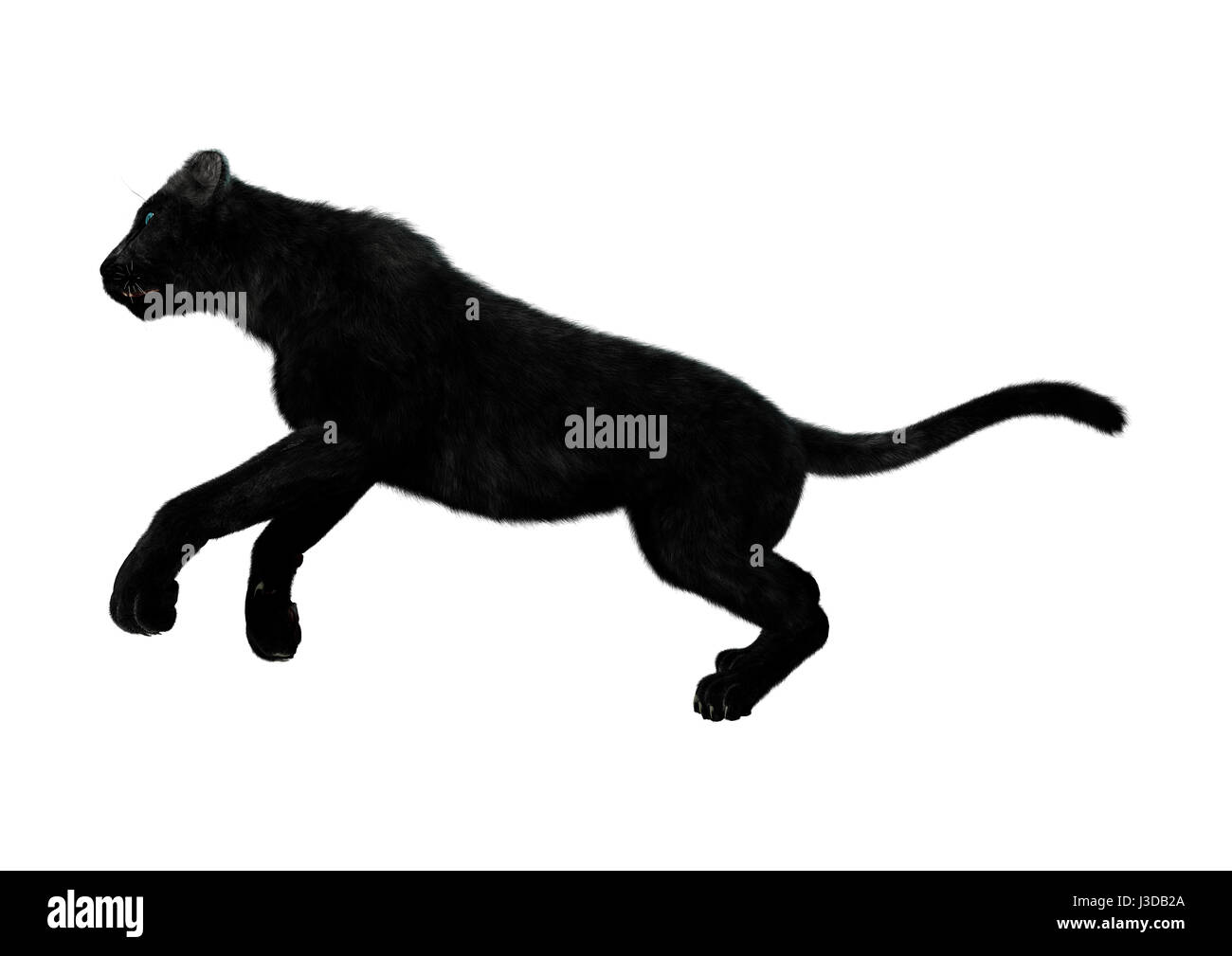 Black panther leaping