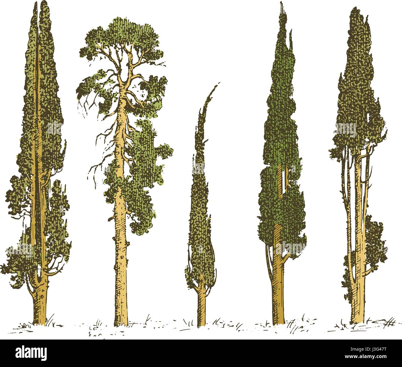 Set of hand drawn trees italian cypress and pine isolated vector set of hand drawn trees italian cypress and pine isolated vector illustration engraved symbols of south evergreen biocorpaavc Image collections