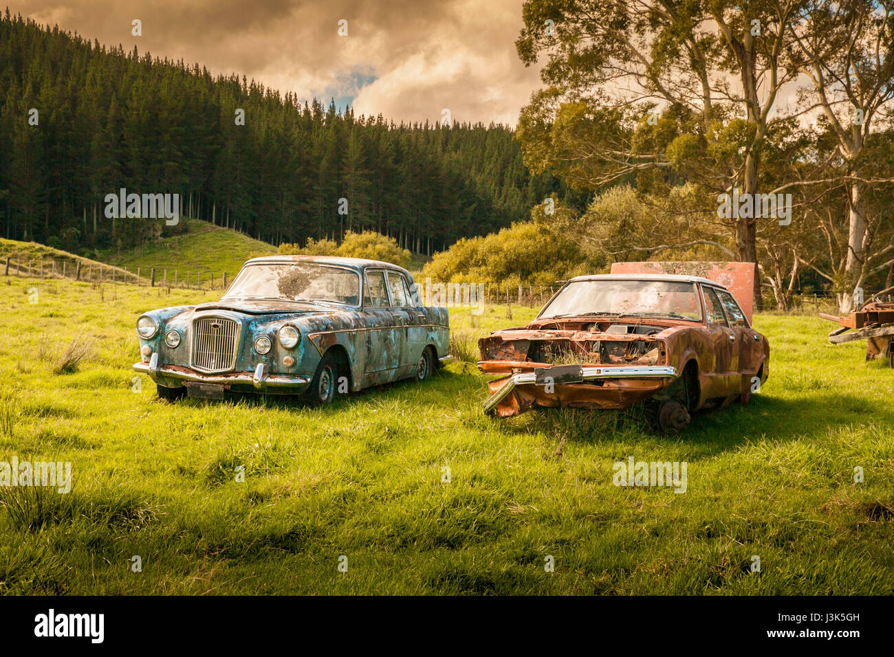 Two old cars overgrown with weeds and abandoned on farmland in a ...
