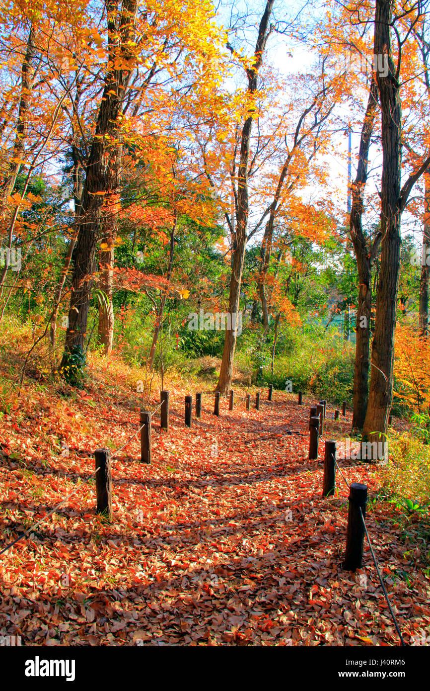 sengen yama koen park trail in autumn color fuchu city tokyo japan