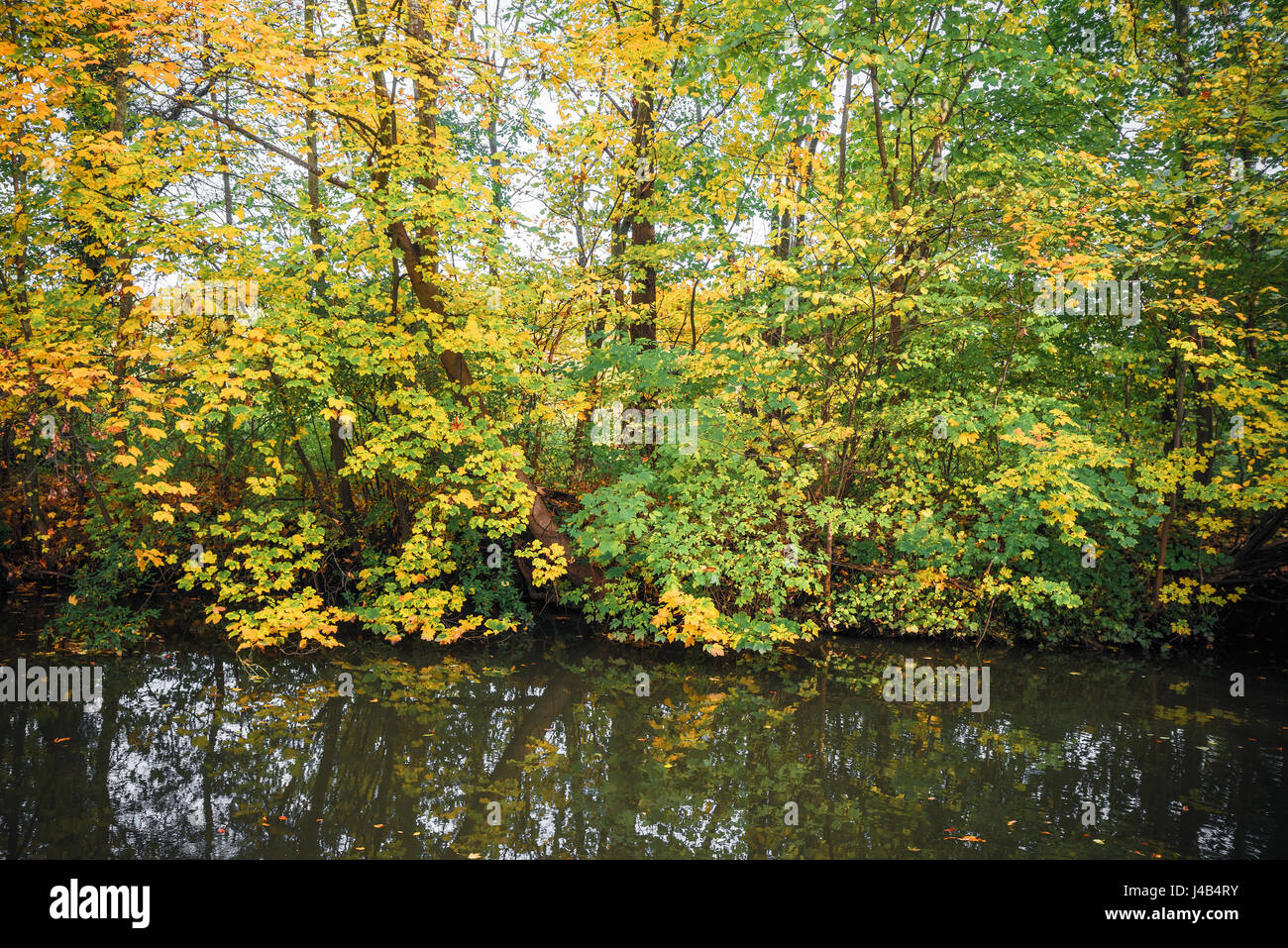 Dark lake with colorful trees in the fall in the autumn season Stock ...