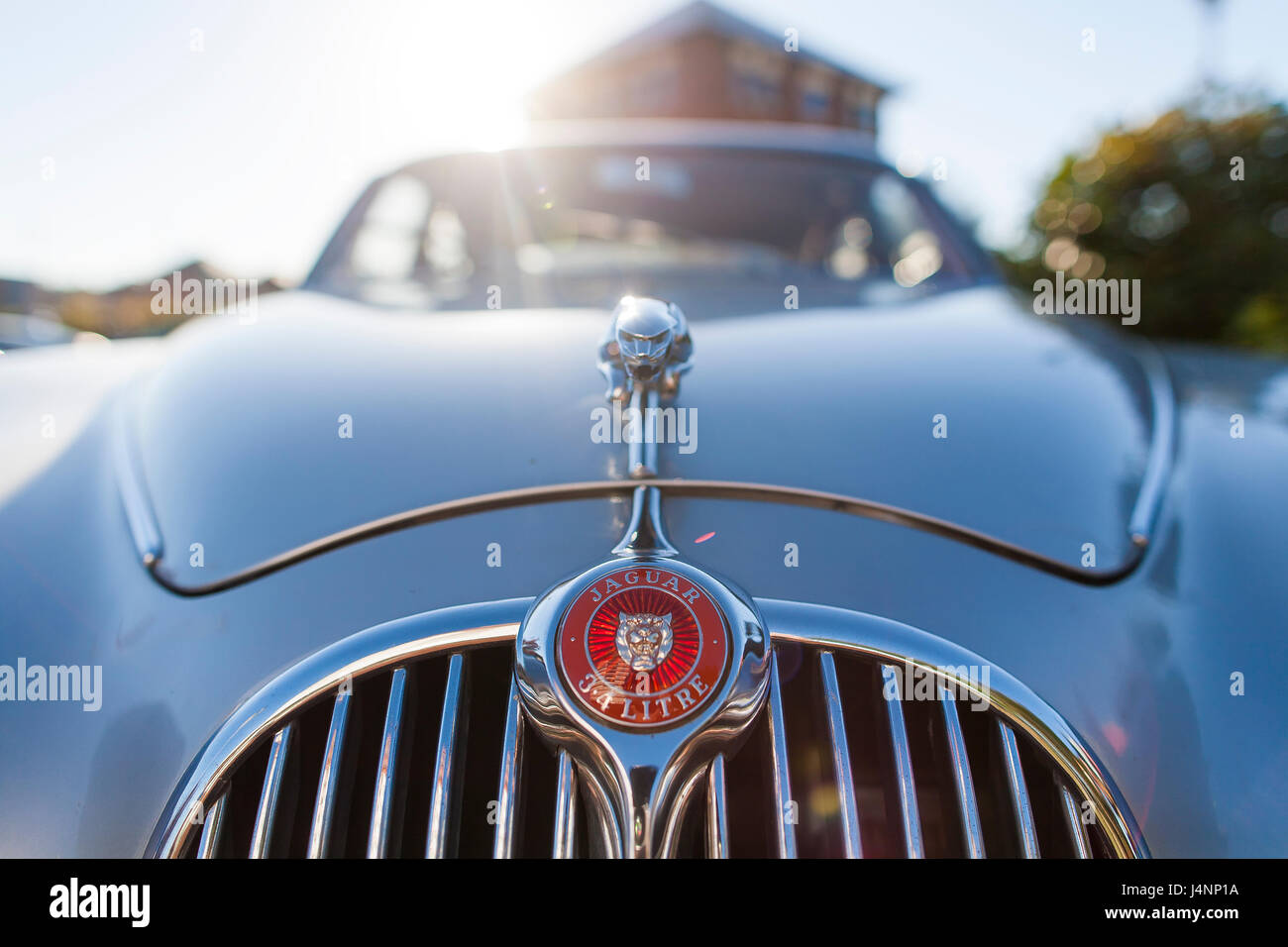 the Jaguar car company emblem or marque on the front grill at ...