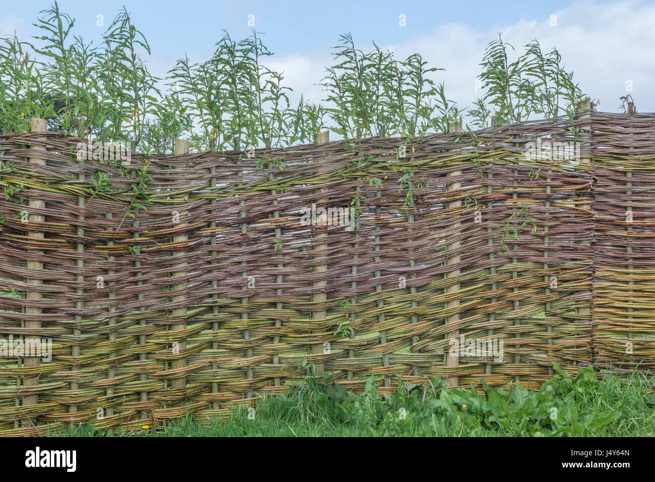 Environmentally friendly living willow fence structure   falls into both  natural world and concepts of barriersWillow Fence Stock Photos   Willow Fence Stock Images   Alamy. Living Willow Fence Panels. Home Design Ideas
