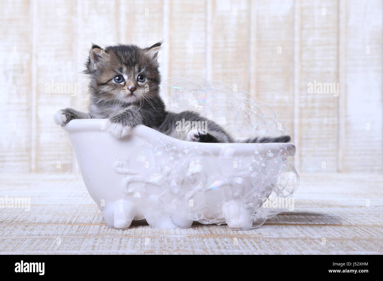 Adorable Tiny Kitten in a Bathtub With Bubbles Stock Photo, Royalty ...