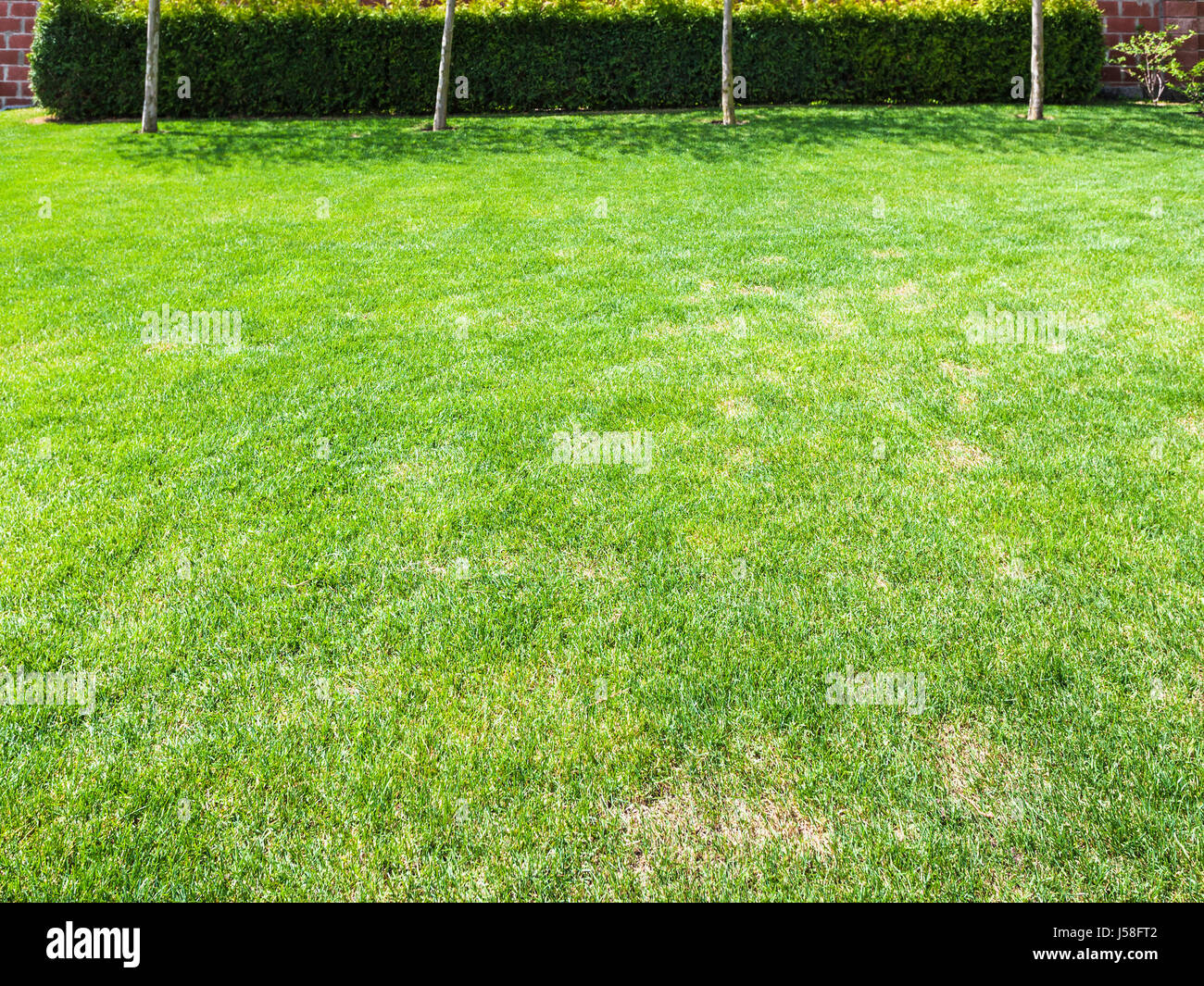 clipped lawn with green hedge on backyard of country house stock