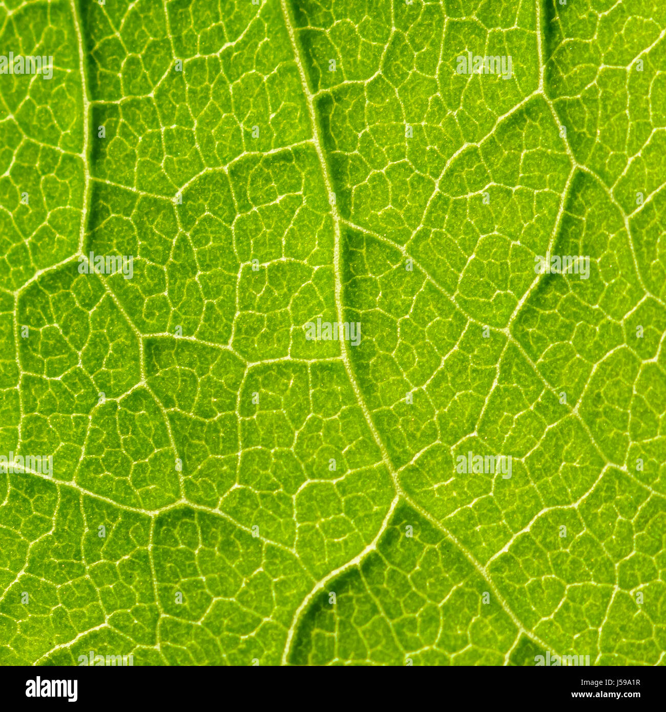 ecology stomata Stoma the stomata are valves found on aerial plant organs that are in international review of cell and molecular biology  stomata close to prevent water.