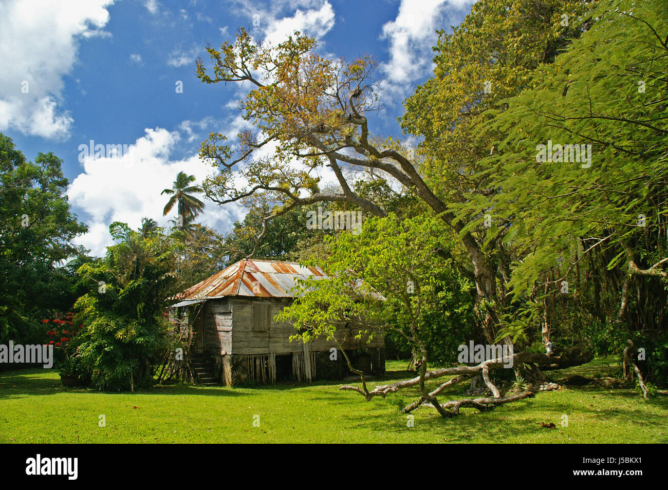 beauteous trees to plant near house. house building beautiful beauteously nice bucolic relaxation tree garden  Stock Image Plantation House St Lucia Photos