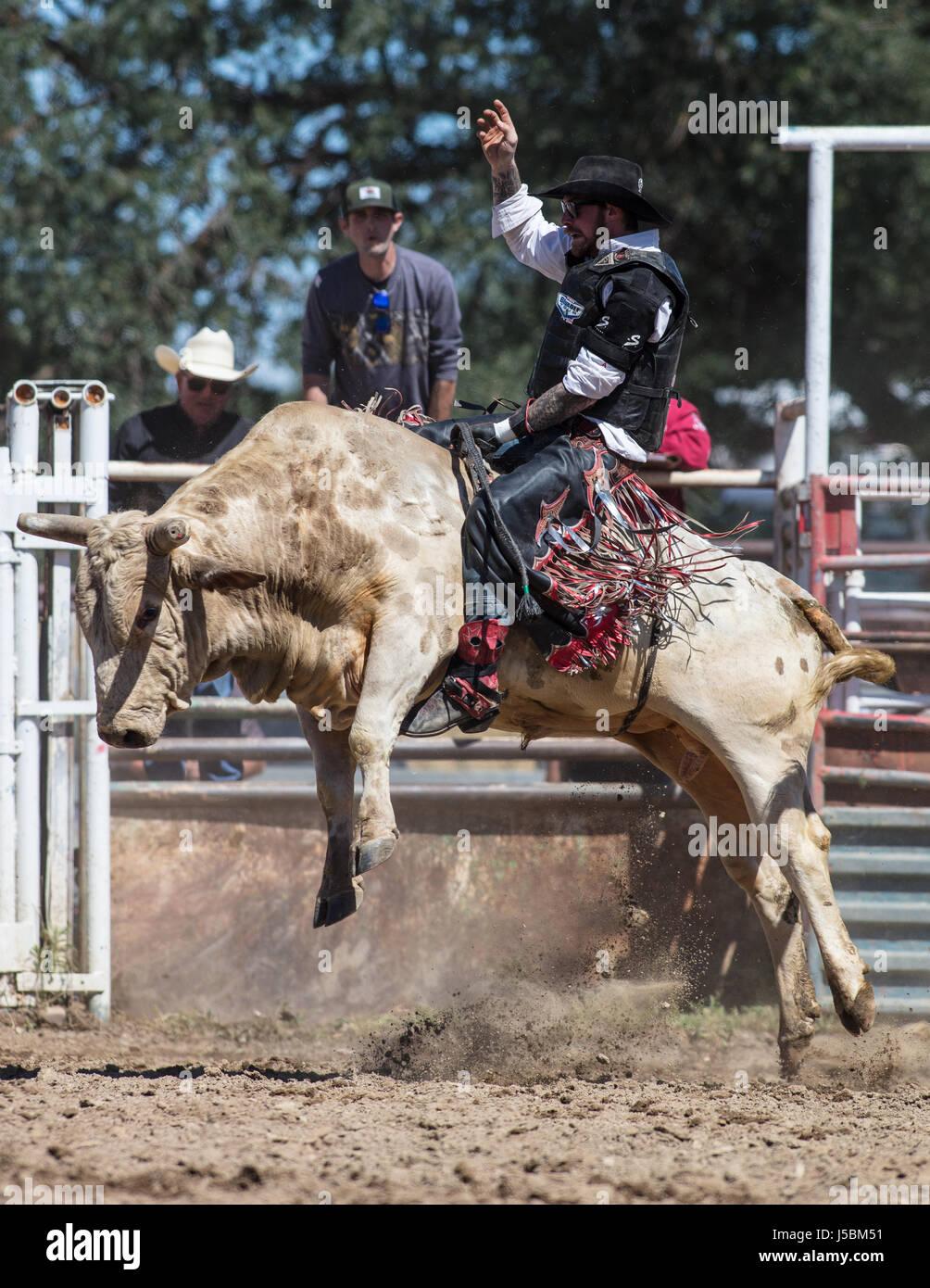 Saddle Ranch Bull Stock Photos Amp Saddle Ranch Bull Stock