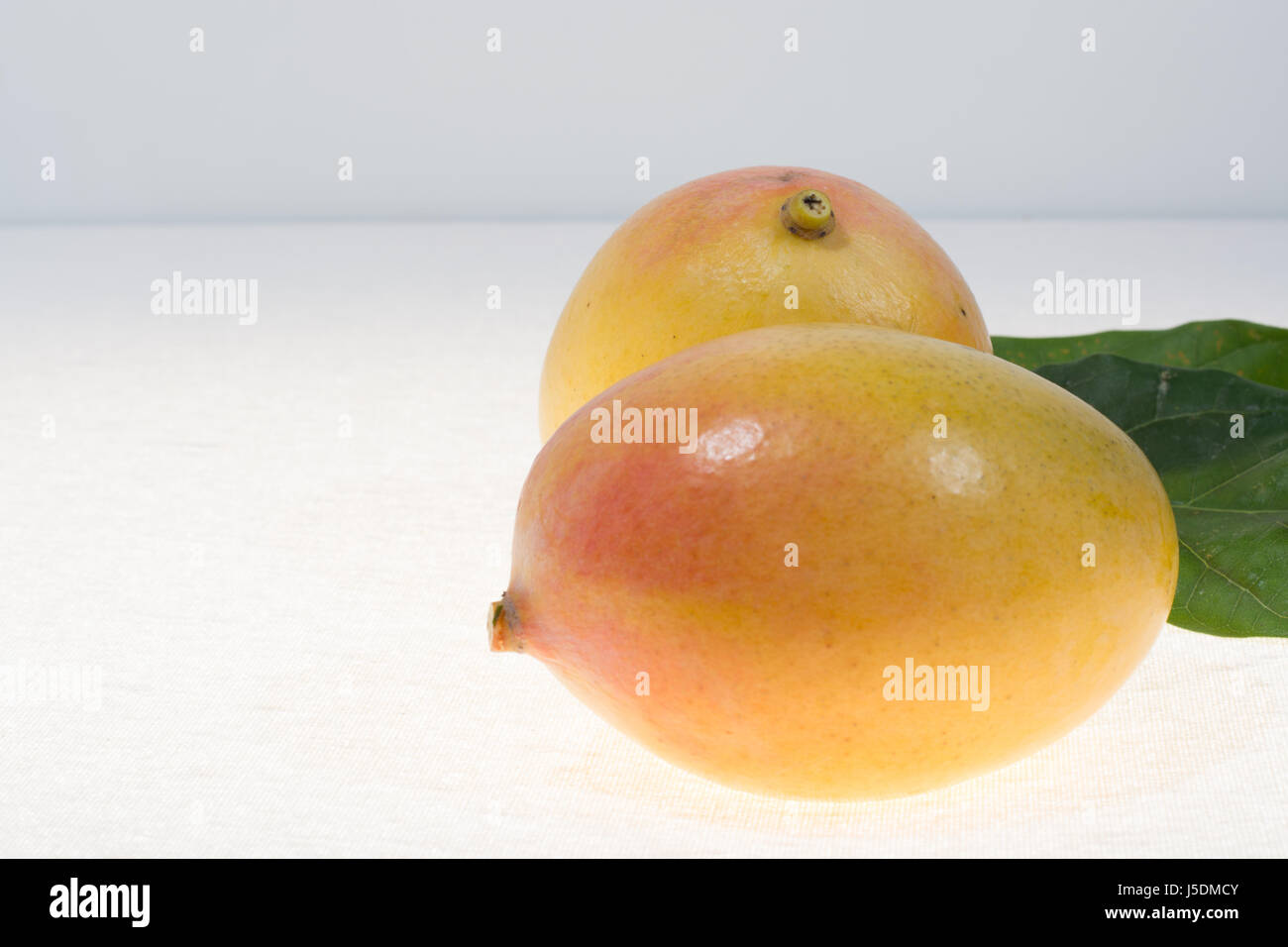 Two Ripeanic Golden Yellow Mangoes Ready To Eat Close Up Stock Image  Mangifera Stock Photos &