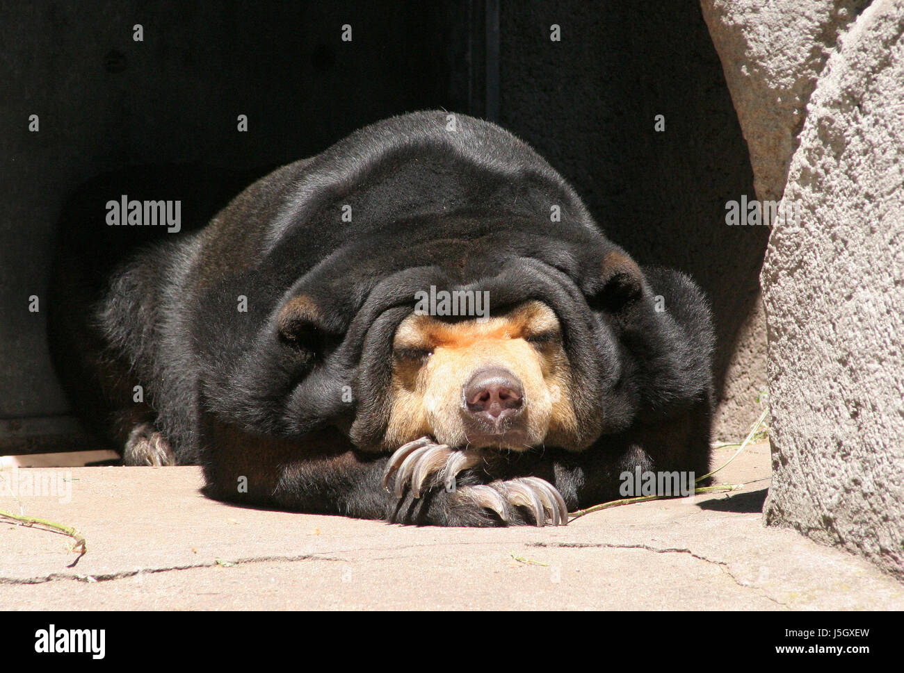 Cave Bear Stock Photos & Cave Bear Stock Images - Alamy