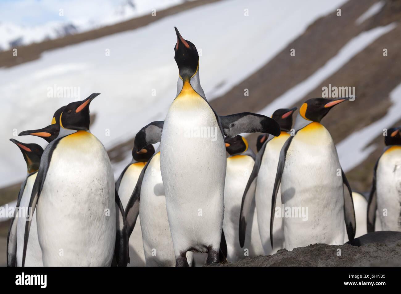 emperor penguins essay