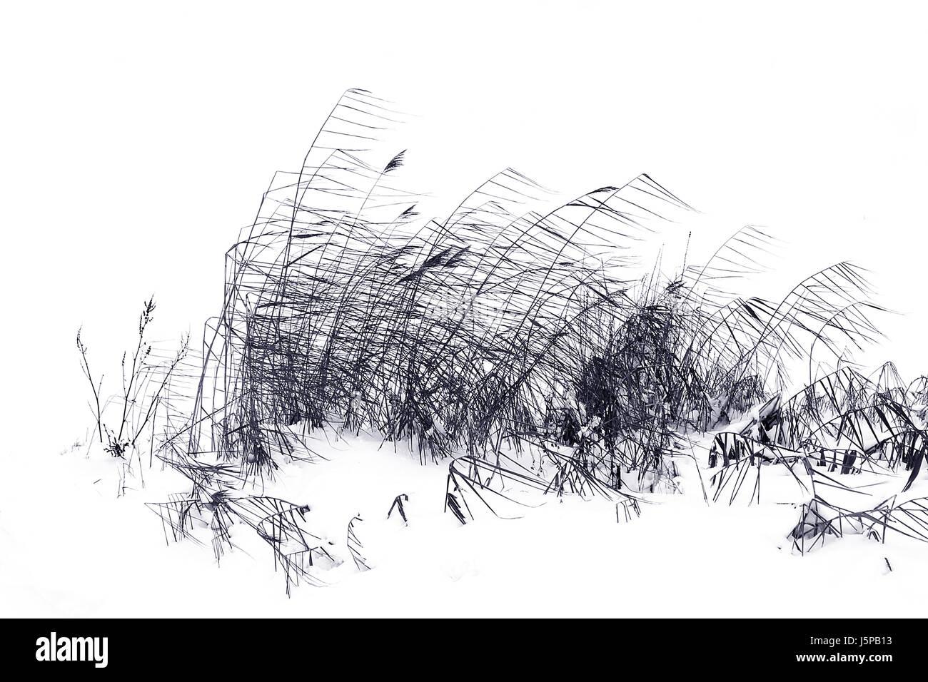 winter cold grasses graphic monochrome filigree windy icy snow ...