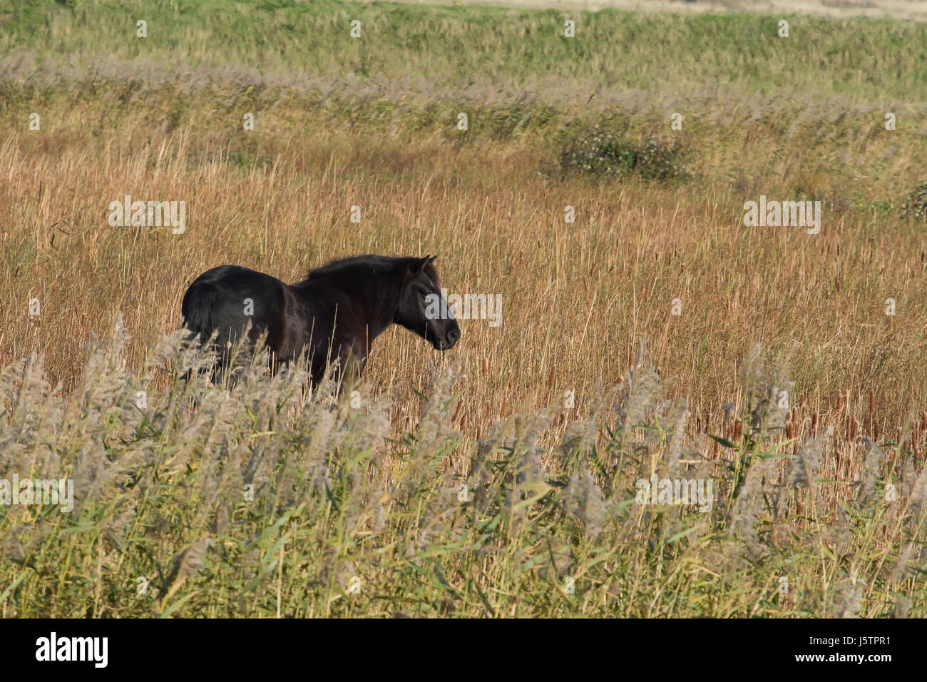 long manes stock photos - photo #30