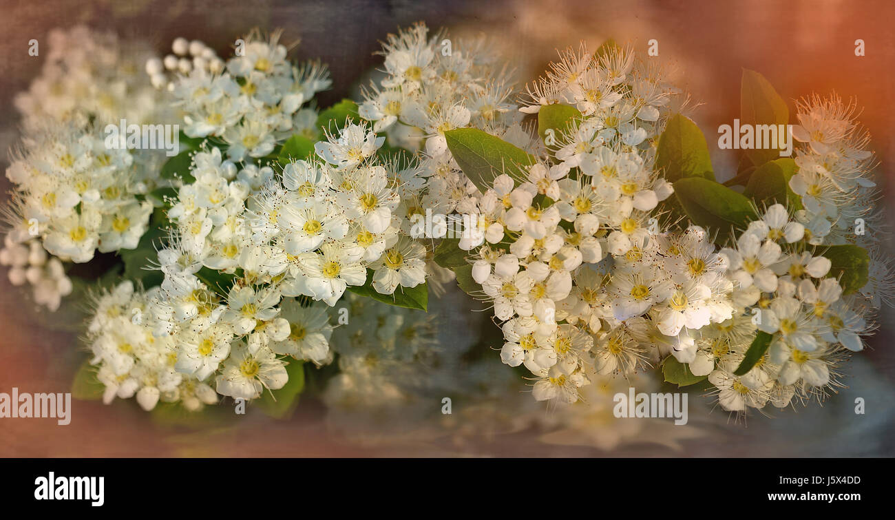 Art bouquet of small white flowerstinted glass the horizontal art bouquet of small white flowerstinted glass the horizontal frame izmirmasajfo