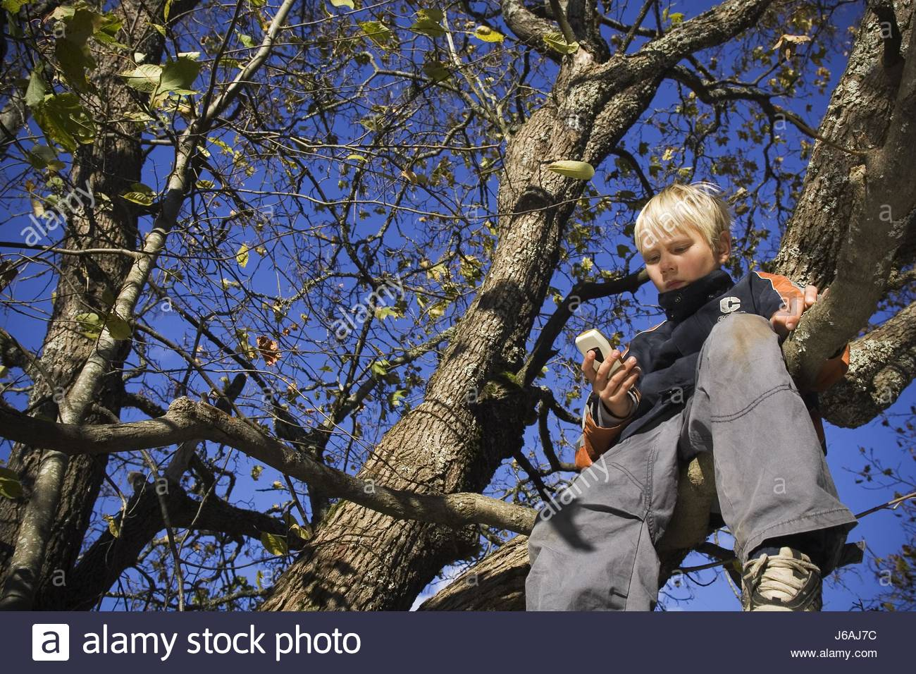 telephone phone cellphone mobile mobile phone tree shoes branches ...